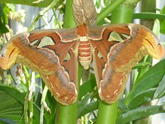 Really Big Butterfly