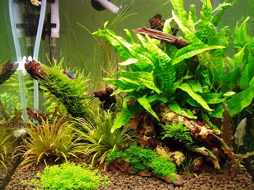 Aqua tank