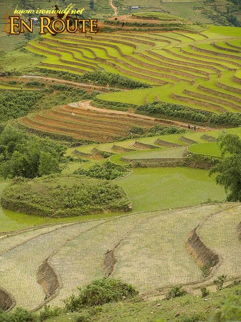 Sapa Valley Terraces