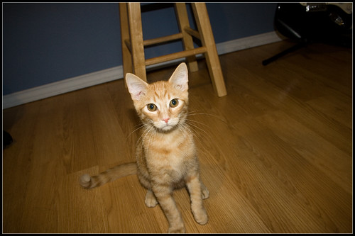 Kitten TBoone