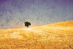 100 years of solitude / 100 aos de soledad (victor_nuno) Tags: blue espaa tree azul geotagged spain solitude explore thoughts silence simplicity rbol soledad 2008 burgos silencio caminodesantiago castilla whoami caminosantiago pensamientos pramo sencillez interestingness29 victornuno vctornuo quinsoyyo wwwvictornunocom caminointerior innerpath geo:lat=42328061 geo:lon=3967695