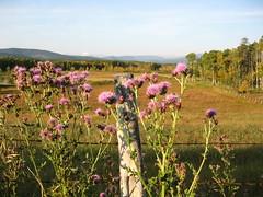 Mount Cornwall and Mount Glasgow (ocean.flynn) Tags: foothills mountain mountains walking geotagged rockies flora alberta creativecommons rockymountains geotag geotagging braggcreek wildflowersnorthamerica moosemountain walkingtrails prairiemountain calgarydaytrips braggcreek2