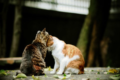 cat_051 (Don't worry) (PyunpyunMaru) Tags: cat  straycats streetcats  catspotting kissablekat bestofcats catmoments