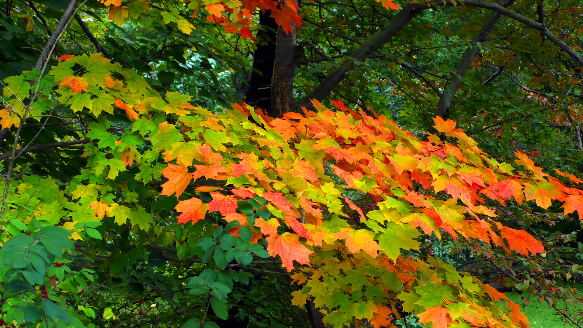 Early Fall Color - Ramapo Reservation, NJ