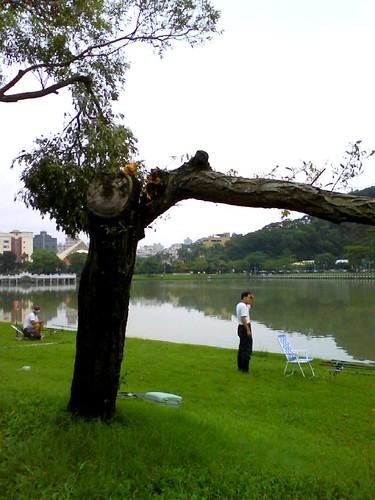 你拍攝的 薔蜜走後再大碑湖留下的痕跡。