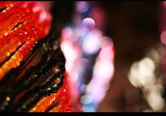 sculpture of light (peia... missing you!!!) Tags: light france detail canon europe colours searchthebest bokeh val provence luberon canoneos350d fragment saignon canonef50mmf14usm doucefrance xoxoxoxoxox hbw twtme suculpture beautifulbokeh bokehlicious chambreavecvue artlibre infinestyle peia lightofnight
