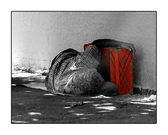 The Life (Andria Solha) Tags: life sleeping red man bag homeless poor sidewalk safe pobre suitcase miserable homem mala dormindo damp calada travelbag semteto miservel sleepingonthesidewalk maladeviagem relento andriasolha acsolha sleepingindamp dormindonacalada dormindoaorelento