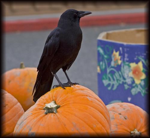 albie's crow