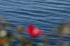 (DigiDreamGrafix.com) Tags: life autumn usa art nature digital work photography photo nc interesting graphics october foto fotografie sony events north assignment northcarolina best ag carolina pro southeast fotografia alpha 2008 digitalphotography a300 biblebelt      digifoto atalake  agphoto conventionphotography digidreamgrafix digidreamgrafixcom dfpro26004 digitaleventphotography tradeshowphotography tradeshowphotographers golftournamentphotography