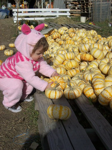 @ The Pumpkin Patch