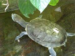 vancouver aquarium turtle vancouveraquarium