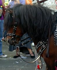 """argentina pony 5 (Martina V.) Tags: horse argentina de caballo bay pony stallion poni gaucho """"feria mataderos"""""""