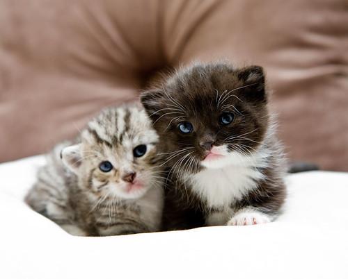Katzen by paulh76.