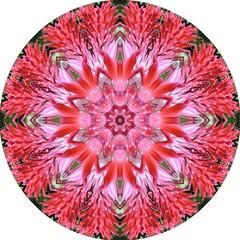 Bromiliade Flower