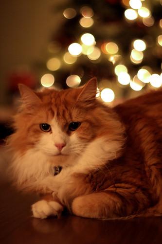 Christmas Twisp