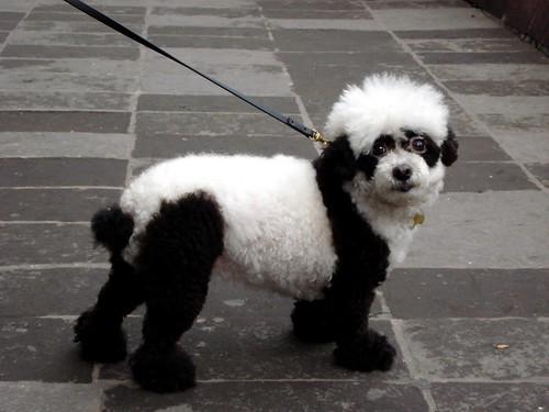 ¿panda?