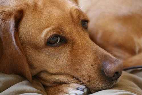 "My friend's dog ""Clare"""