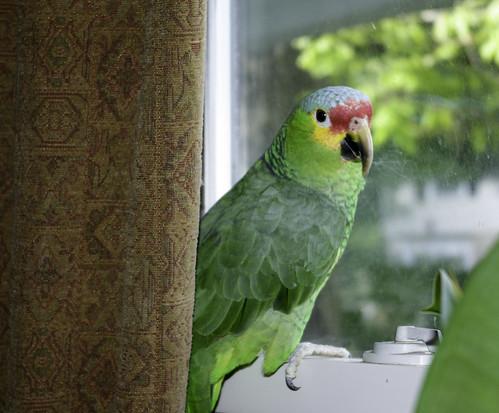 Milo at the window