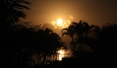 My own Gold Coast (guiceccatto) Tags: sun sol praia beach sunrise do palmeiras palmtrees nascer