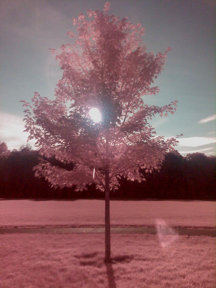 It's a Tree!