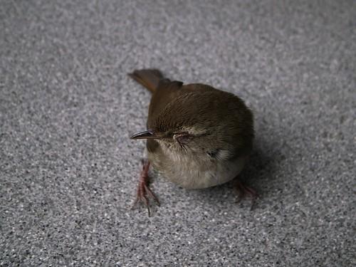 目を閉じた小鳥
