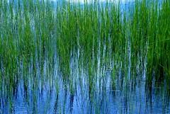 Pond (cienne45) Tags: friends italy nature cienne45 carlonatale explore natale naturesfinest artisticexpression explorewinnersoftheworld exploreexset explore1336