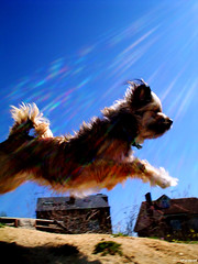 Dog (ArteD!) Tags: dog animal salto resplandor thelittledoglaughed
