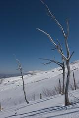 カワバラから遠く大雪山系