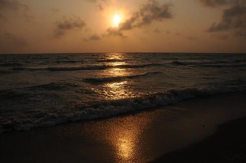 Golden Sea 1