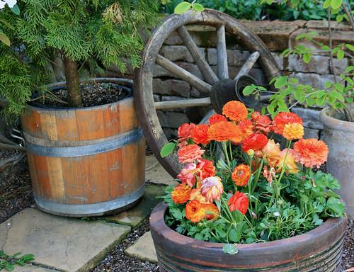tulps pots
