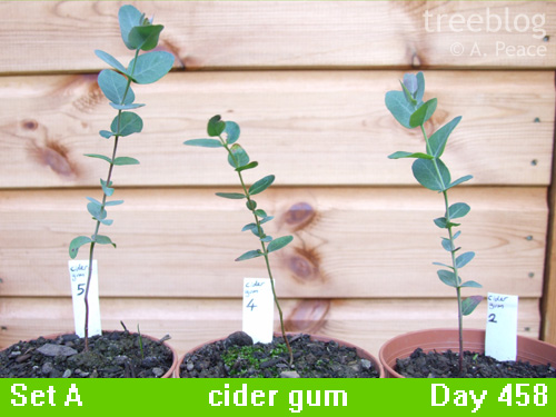 cider gums Nos. 2, 4 and 5