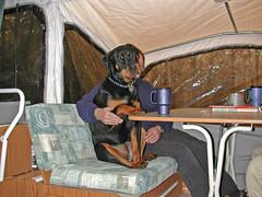 Miss Heidi (Lulu & Ken (cheneworthgap.com)) Tags: park camping heidi rott rottweiler camper rottie bsf