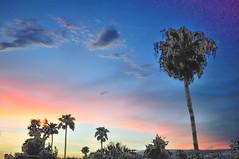 Arizona Sky (ellene000) Tags: pink blue arizona sky beautiful clouds sunrise palms vivid palmtrees tempe