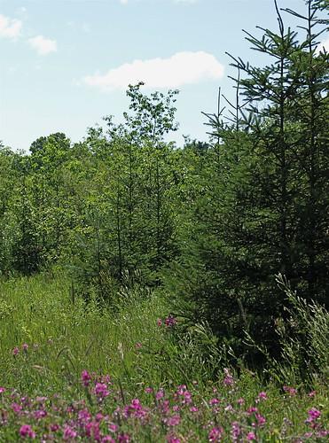 Meadow on Washington Island