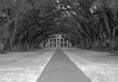 Between the Oaks (Kat Davis ) Tags: trees blackandwhite mono louisiana searchthebest wideangle explore plantation mansion oaks oakalley treelined greekrevival oakalleyplantation kathydavis madeexplore flickrgolfclub 7daysofshooting landscapesofvillagesandfields wideanglewednesday katdavis week3between katdavisphotography