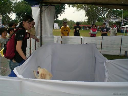 Dogathon UPM 2008