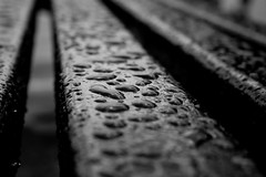 raindrops keep falling on my...bench (jonoakley) Tags: england white black macro monochrome up rain closeup bench close north east sunderland