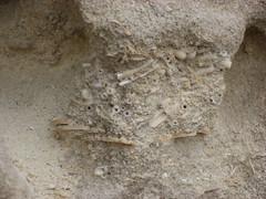Matera - Fossili