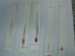 Cromatografia ((biophotos)) Tags: lab bradford experiment biology microbiology biologia biochemistry microbiologia cromatografia absorbance