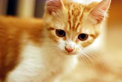 kitty04.jpg