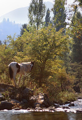 Autumn and a horse