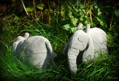 Elefantsafari 3