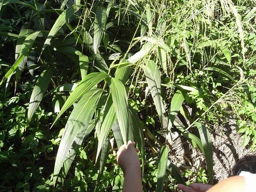 你拍攝的 34植物。
