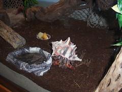 Xena Crabs Jacks the Jumbo  Xena and GG