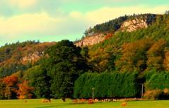 Moncrieff Hills