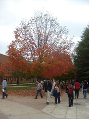 Fall Tree at Major University
