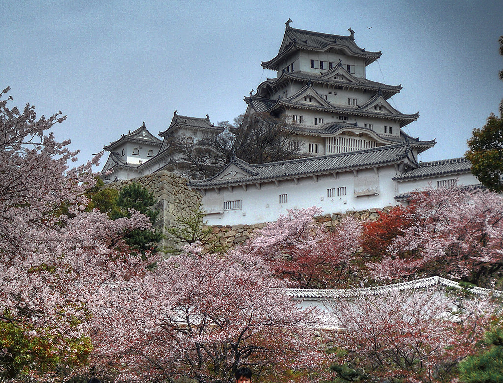 View of Himeji Castle from below during cherry blossom season, Japan.