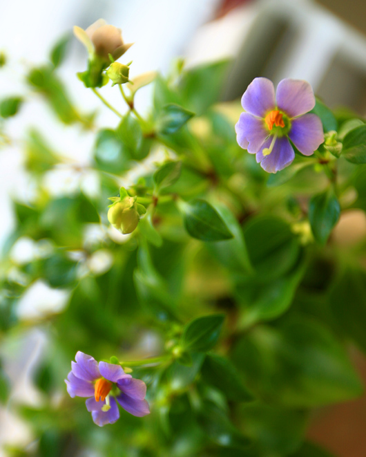 water-plant-3