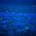 Fireflies, Flint Hills by JC Richardson