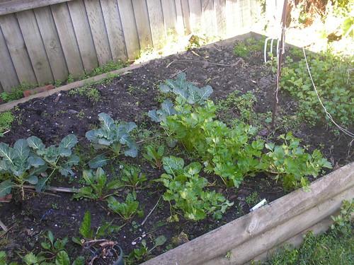 vege garden aug 08